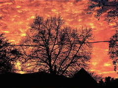 Silhouette (Musical Mint) Tags: pink sky house toronto canada color colour tree silhouette night clouds evening colorful experimental dusk creative colourful pinksky helluva musicalmint