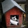 The cat's in the cradle