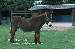 0746 (Lothar Lenz) Tags: england esel donkeysanctuary