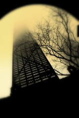 rise (Olivia Leigh) Tags: morning chicago church fog branches hancock johnhancock dec1 goldcoast riseup
