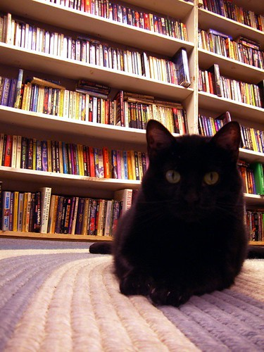cute black bookstore cat pic