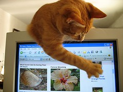 Modern day kitty gets the mouse! (tryingtolearn USA) Tags: cats computer mouse funny 100v10f kitties funnycats greatcapture instantfave tryingtolearn abigfave shieldofexcellence bestofcats anawesomeshot impressedbeauty ultimateshot firsttheearth lmaoanimalphotoaward pet1000