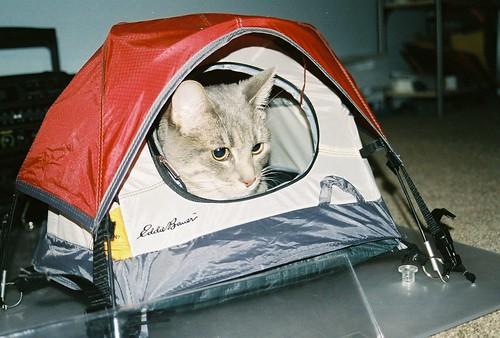 Niffy in Tent