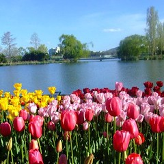 Waterscape with tulips @ Floriade, Canberra Australia (Vanessa Pike-Russell) Tags: park flowers festival landscape flora scenery calendar vibrant australia september finepix nsw mostinteresting fujifilm canberra popular 06 commonwealth act floriade myfaves 4aces s5600 pictureaustralia floriade2006 mootrade vanessapikerussellcom vanessapikerussell auselite vanessapikerussellbest
