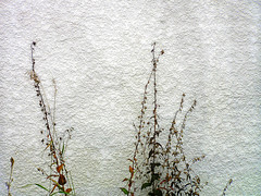 Weeds & Wall - by It