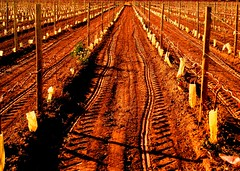 Huellas (radioher) Tags: tractor argentina vineyard vines wine country winery mendoza bodega campo bodegas vino tierra finca huellas huella vias viedos medrano