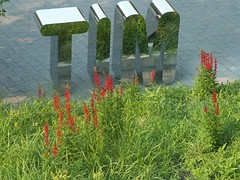 Tim! (gremionis) Tags: flowers sign tim aluminum mit 2006 reflective statacenter 32 bernerslee
