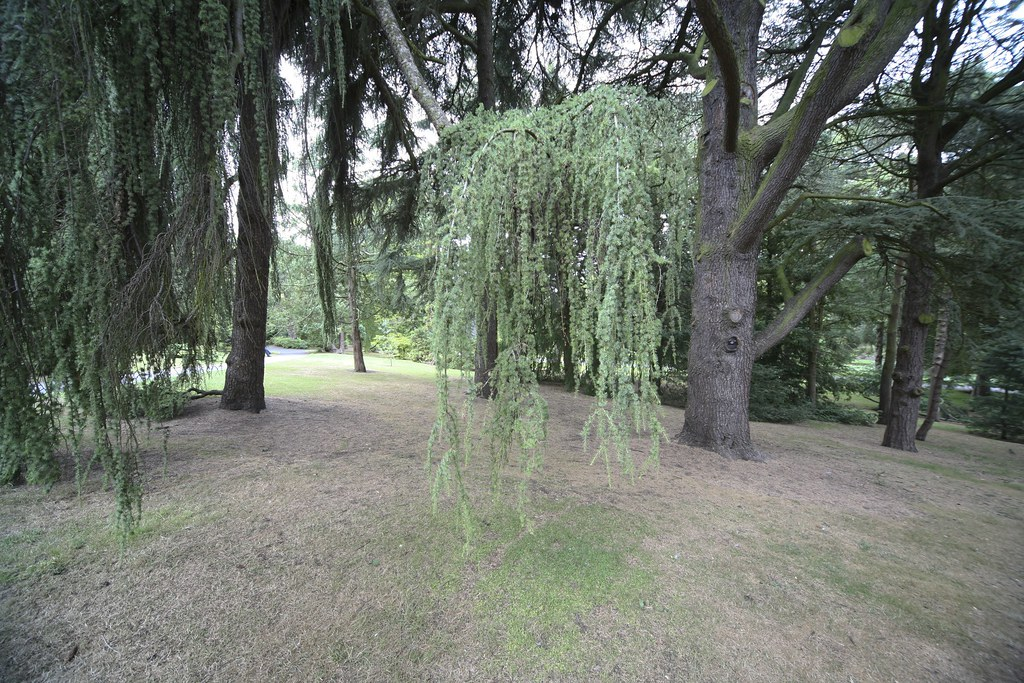 Trees in the Botanic Gardens