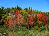 Spectral colors of autumn (Walt K) Tags: autumn trees fall colors up leaves maple michigan champion upperpeninsula waltk