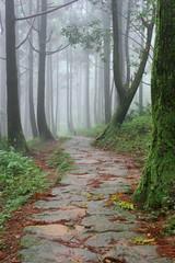 Mist Wood