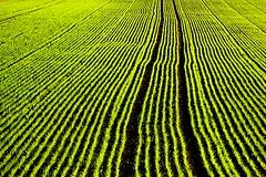 Zen in Agriculture II (aremac) Tags: green field d50 germany deutschland nikon nikond50 zen agriculture neckarhausen 123f50