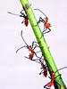 assassins in attack mode (getthebubbles) Tags: red green fall bug insect florida kodak assassinbug reduviidae getthebubbles utatathursdaywalk28