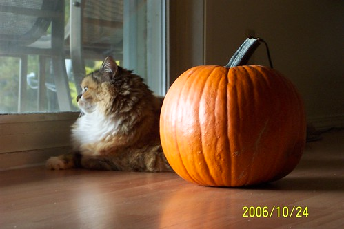 Aurora and the pumpkin