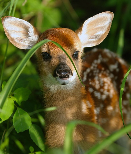 Images of wild baby animals - photo#1