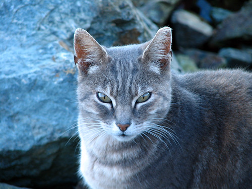 Feral cat found on the pier