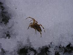 Cryo-arachnoid?