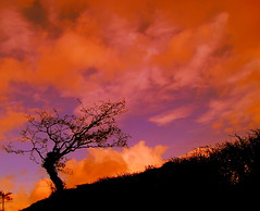 reach for the sky (brynmeillion - JAN) Tags: sky color tree oak ceredigion awyr derwen coeden plasnewydd lliwgar llandyfriog 1on1photooftheday abigfave outstandingshot ci33 anawesomeshot aplusphoto megashot theroadtoheaven
