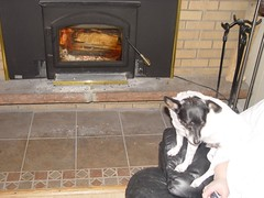 DSC02996.JPG (Matthew Saunders) Tags: cute dogs fire napoleon ccc insert colourcoordinatedcrew