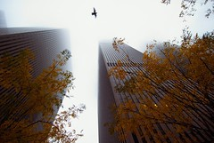 Rockefeller Center Shrouded in Fog - MDPNY20061113 - by mdpNY
