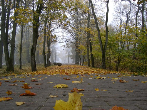 Autumn fogs in Latvia