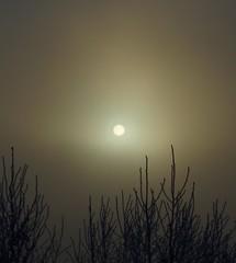 sun thru fog