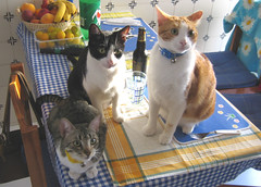 180-July'06 (Silvia Inacio) Tags: cats cat orangecat tabby gatos tuxedo gato princesa noddy bigodes cc400 cc100 interestingcat cat500