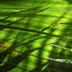 Green (jay_kilifi) Tags: color colour green leaves bravo shadows abigfave greenx