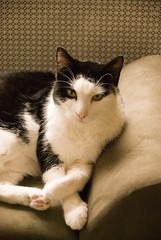 Harry (S.D.) Tags: cats cat nikon harry 2006 vr dx 18200mm november2006 d80 nikond80