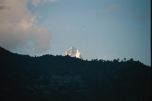 231S-Machhapuchhare(FishTail)