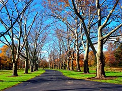 Autumn Path (Manny Pabla) Tags: road park autumn trees sky plants usa fall nature grass leaves gardens garden landscape us newjersey estate unitedstates path farm sony nj bluesky somerville farms leafs bushes shrubs dukegardens singh hillsborough hedges bridgewater somersetcounty walkonthewildside wildside saini pabla dukeestate autumnpath dukefarms
