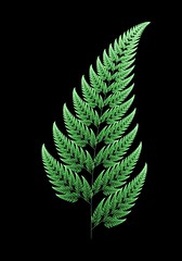Fractal Fern (Chaos Game Explanation) (roddh) Tags: life fern blog learning fractal ifs fractint roddh