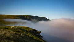 Creeping fog (cliveg004) Tags: rhosdirion blackmountains wales southwales inversion temperatureinversion fog sheep mist escarpment mountains wilderness nikon d5200 s ihave seen for while