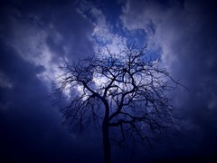 Kanon. (ALOHA-EAGLE) Tags: autumn shadow sky cloud tree nature backlight interesting kanon pachelbel abigfave impressedbeauty