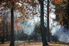 just smoke... just fall... just trees... (Magda'70) Tags: autumn fall america texas tx smoke easttexas gilmer lakeothepines pineywoods gladewater othepines