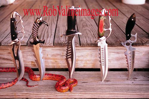 Bowie Knives and Corn Snake