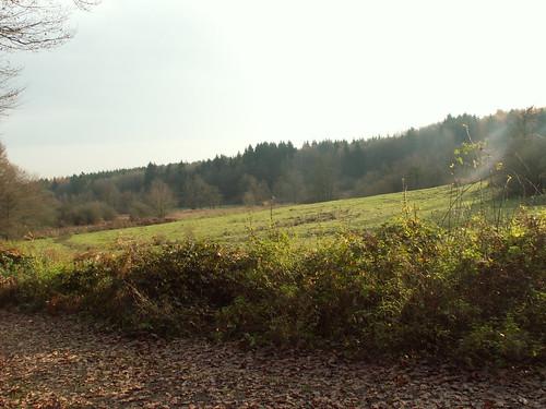 Abzweig in Wald 1