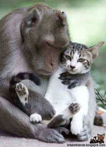 Animals in Love - Kitten and Monkey