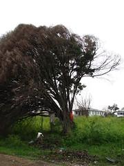IMG_5177 (viaKendra) Tags: katrina destruction neworleans ninthward