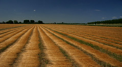Flaxfield on a sunny day (Jean de la Tte) Tags: zeeuwsvlaanderen aplusphoto nouvellephotography