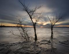 Sentinels (IrenaS) Tags: longexposure trees sunset 20d nature water canon river bravo quebec montreal stlawrence 1022mm ilebizard magicdonkey specnature fivestarsgallery abigfave flickrgold