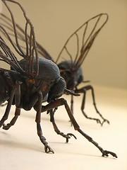 New Zealand, Milford Sound: Pests - by kool_skatkat