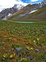 Swinje Lake, Pakistan (Kaafoor) Tags: trip travel blue pakistan summer lake beautiful beauty amazing awesome north visit best valley pakistani adeel distortions iloveit northernarea karambar theworldsbest greaan pakistaniphotographer karomber karomberlake karachite ilovetraveling ihavebeentothisplace
