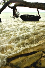 Havelock Island, Andaman Islands (Ashit Desai) Tags: sea india beautiful island asia most barefoot beaches havelock wildorchid andamans andamanislands beautifulbeaches andamannicobar portblair radhanagarbeach havelockisland ashitdesai