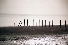 minimal landscape (christing-O-) Tags: africa wood light sea vertical sepia 510fav seaside foggy heat remembrance stake nostalgy guinbissau bolama 0xa9a29e
