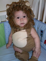 Nathan the lion