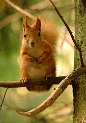 Red squirrel 1 (AlexRK) Tags: moscow redsquirrel interestingness6 animalkingdomelite