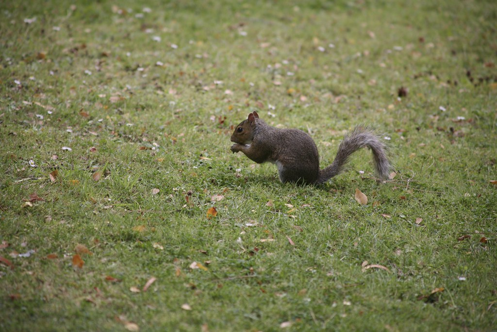 Park Resident
