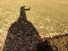 shadow of Father Hennepin (Mamluke) Tags: autumn shadow sculpture sun sunlight verde green fall grass leaves statue automne hojas groen shadows basilica herbst ombra skulptur sombra vert ombre escultura erba copper otoo gras grn tageslicht sunlit stmary schaduw bltter autunno schatten hennepin feuilles herbe 1930 zonlicht ombres scultura hierba beeldhouwwerk bladeren cocathedral lumiredusoleil fogli hennepinavenue luzdelsol mamluke basilicaofstmary fatherhennepin lucesolare deherfst