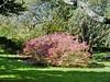 foliage glory