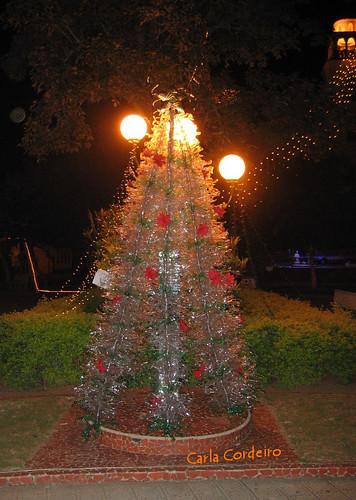 árvore à noite